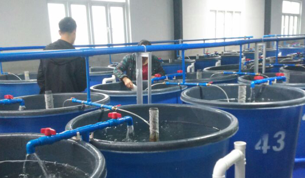 工业生态化循环水水产养殖系统